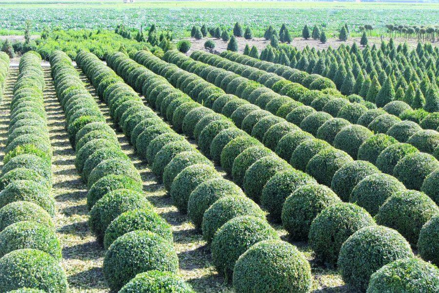 AgroNova - Растения из питомников в Бишкеке