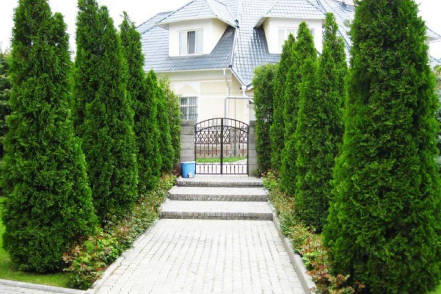 Растения из питомников в Бишкеке. Озеленение участков. Ландаштный дизайн. AgroNova